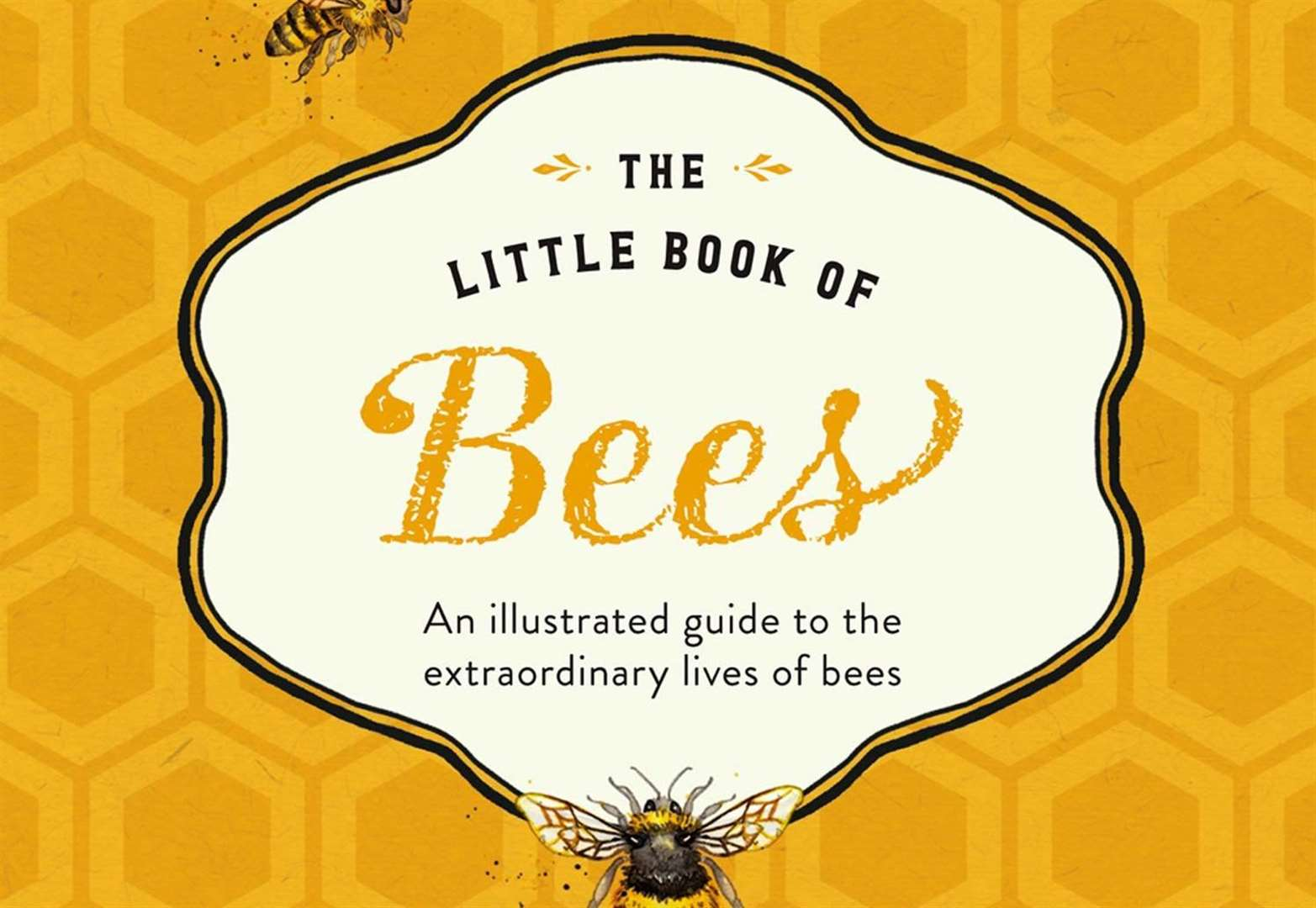 Book of the Week: The Little Book of Bees by Hilary Kearney