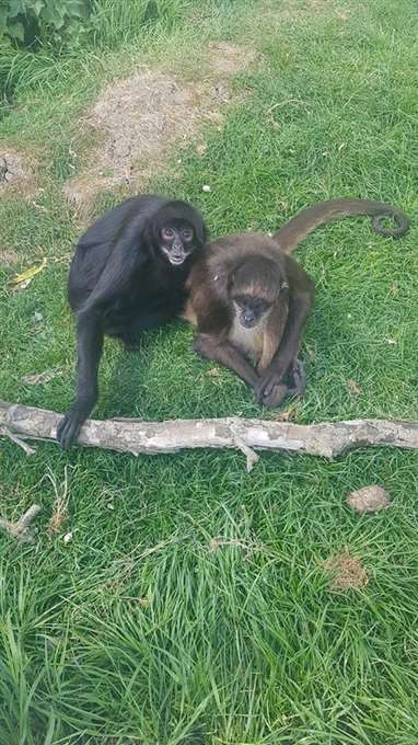 Deeping St James Exotic Pet Refuge We Can T And Won T Let The Animals Starve