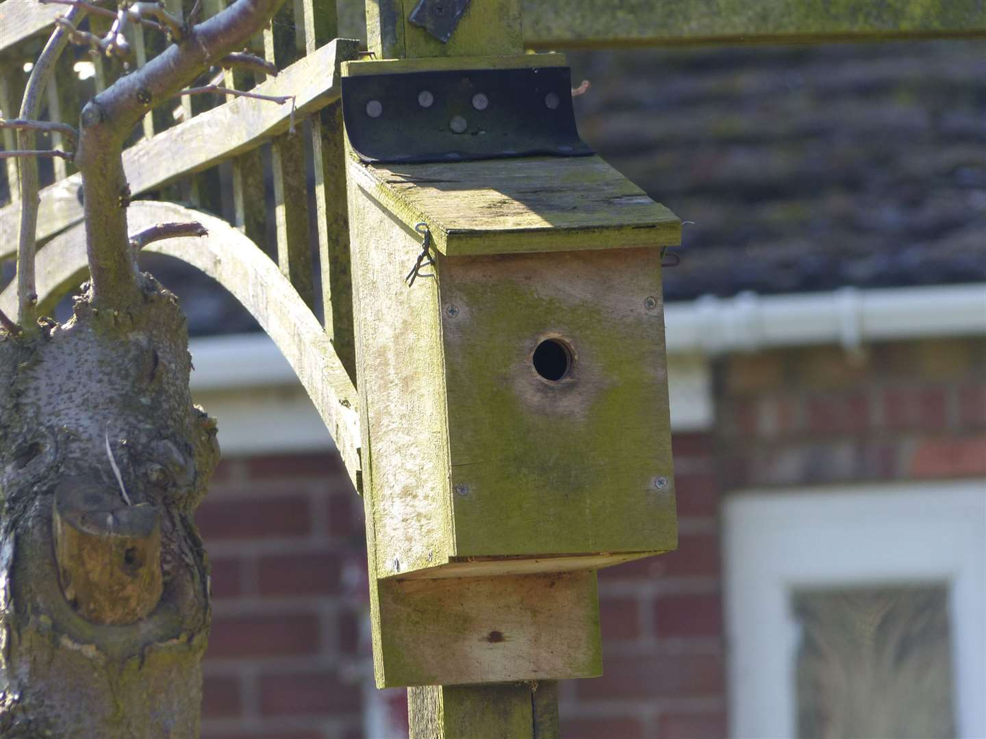 A bird box can help your wildlife photography