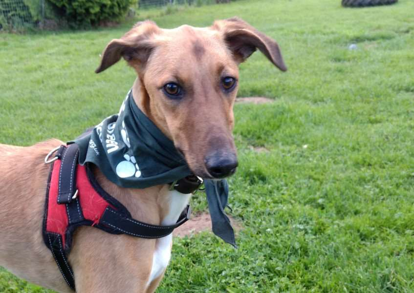 Can you give a home to adorable Rocky?