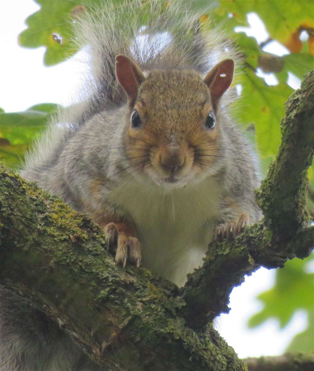Reader Malcolm Pepper's has sent us another lovely picture of a squirrel. (5235610)
