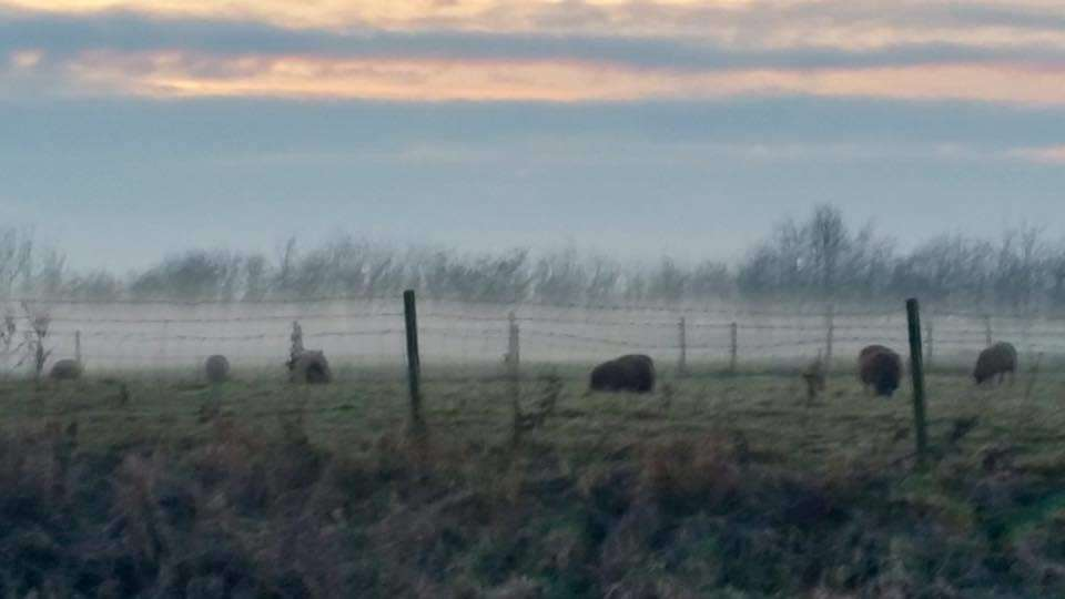READERS' PHOTOS: Titch Newman's picture of low lying mist over the fields at Gosberton (7069391)
