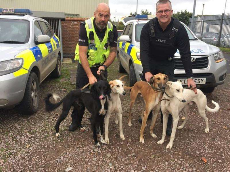 Police with confiscated hare coursing dogs