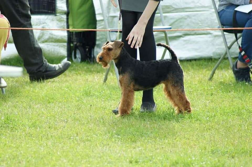Margaret Whitehead is appealing for information after thieves stole four Welsh terriers from Spalding Road, Bourne (43194534)