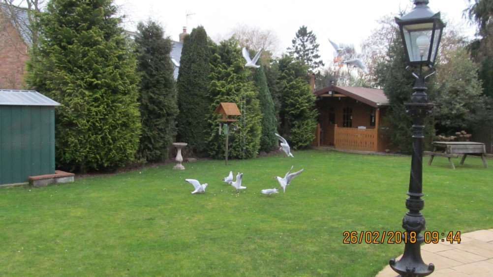 READERS' PHOTOS: Byron Hahn's picture of seagulls invading his garden.