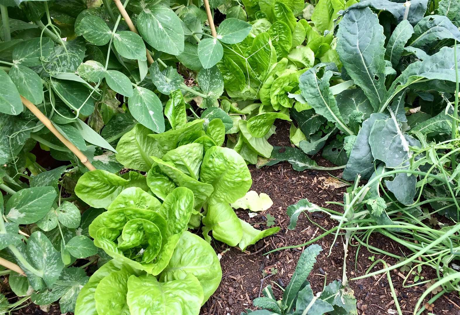 A snapshot of Trish's impressive vegetable patch.