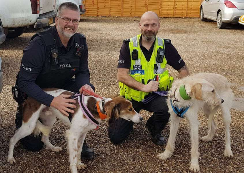 Hare coursing dogs Lucky and Spencer have been found new forever homes.