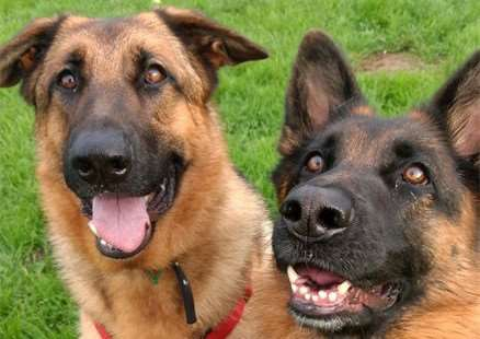 Axle and India need a loving home together