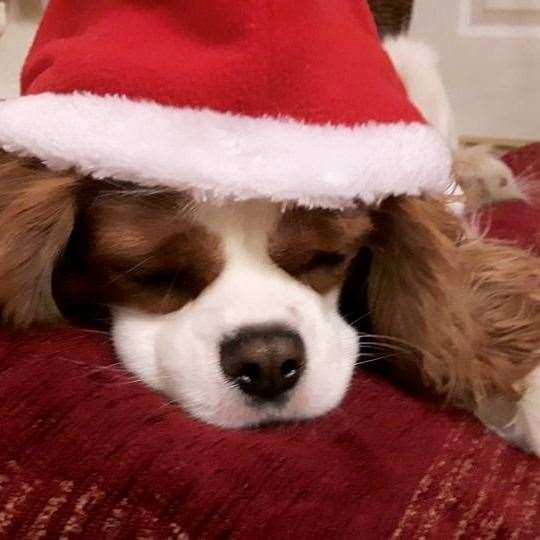 Make sure your dogs are safe this Christmas. (23524035)