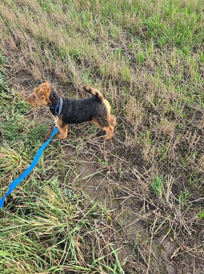 Margaret Whitehead is appealing for information after thieves stole four Welsh terriers from Spalding Road, Bourne (43194538)