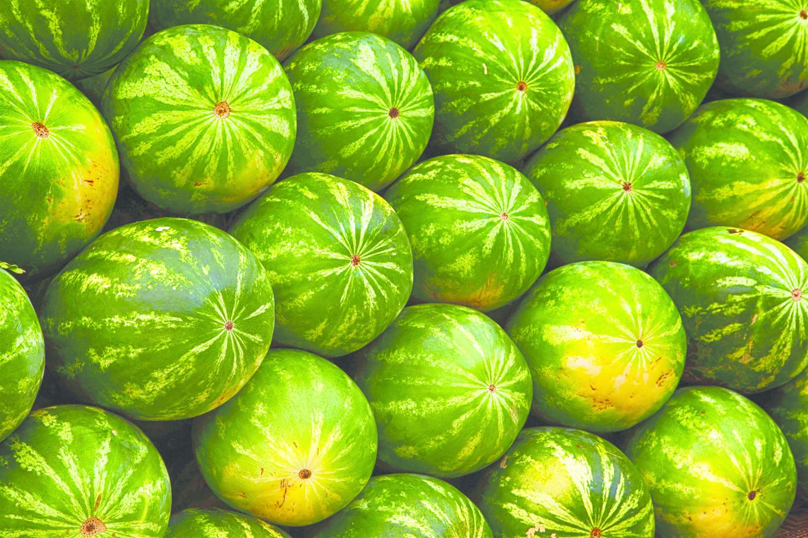 Melons (44441608)