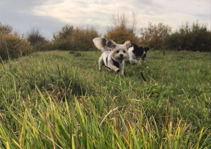 Aliya Ashoor submitted this lovely photo of her dogs unning in the autumn sunshine.