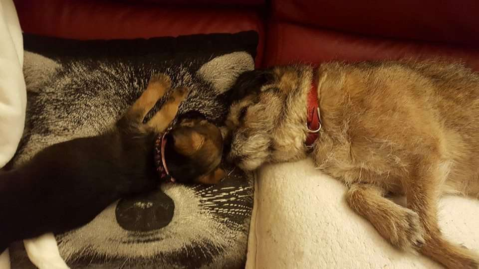Reader's pictures: Jo Nieburg's resting dogs Pepper and Hetty.