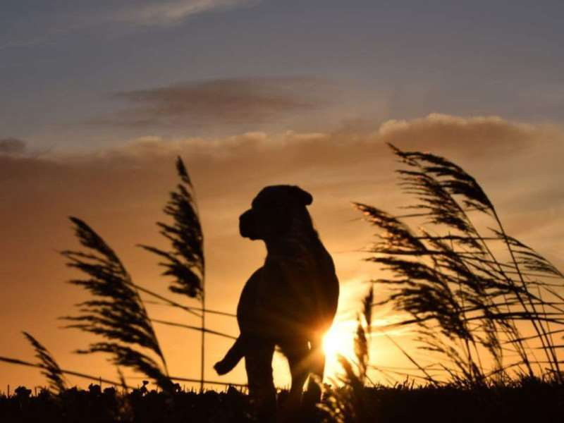Reader Elaine Ground sent us this picture of her dog Max watching the sunrise.