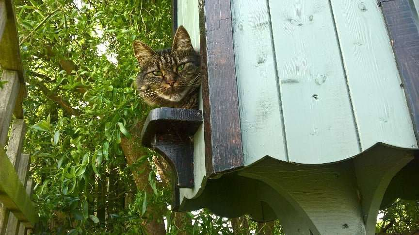 "Reader's Pictures: Faye Spelman says: ""This is the reason we have no birds in the box!"""