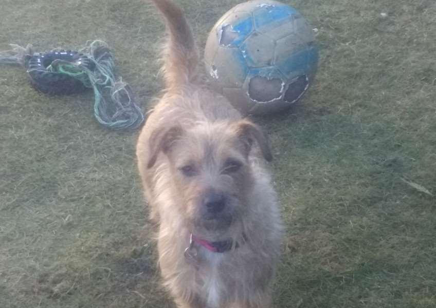 Happy Mia, who has been rehomed with the help of Jerry Green Dog Rescue at Algarkirk.
