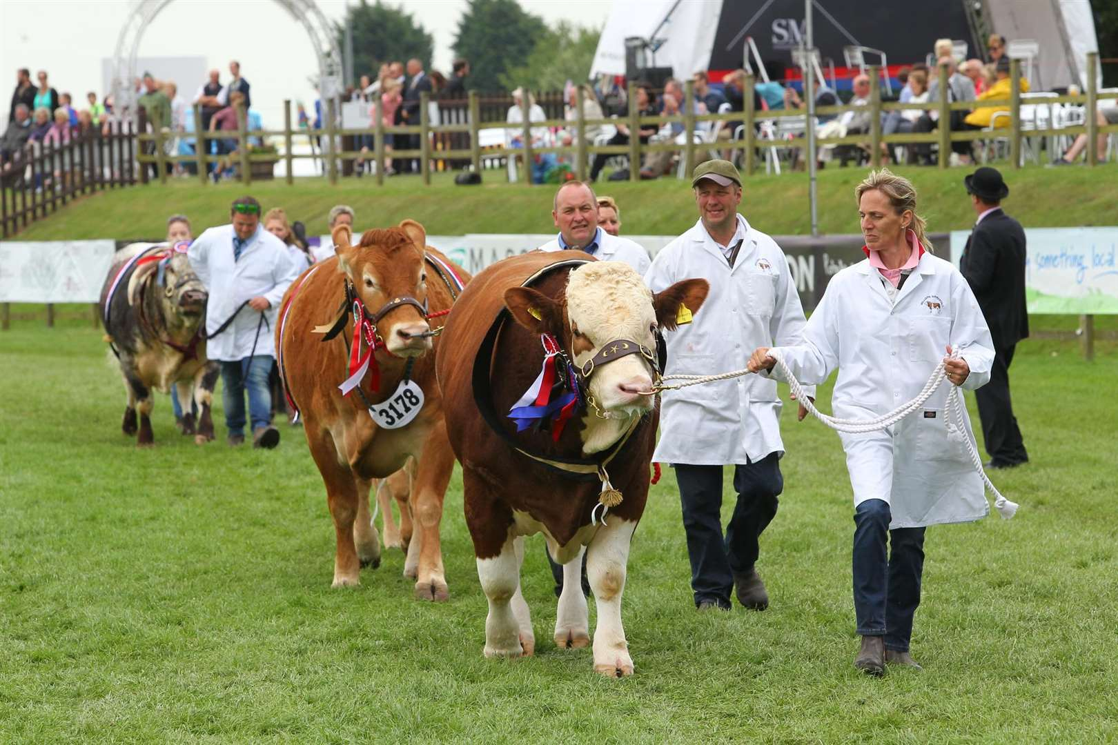 A cattle class at last year's show. (2447280)