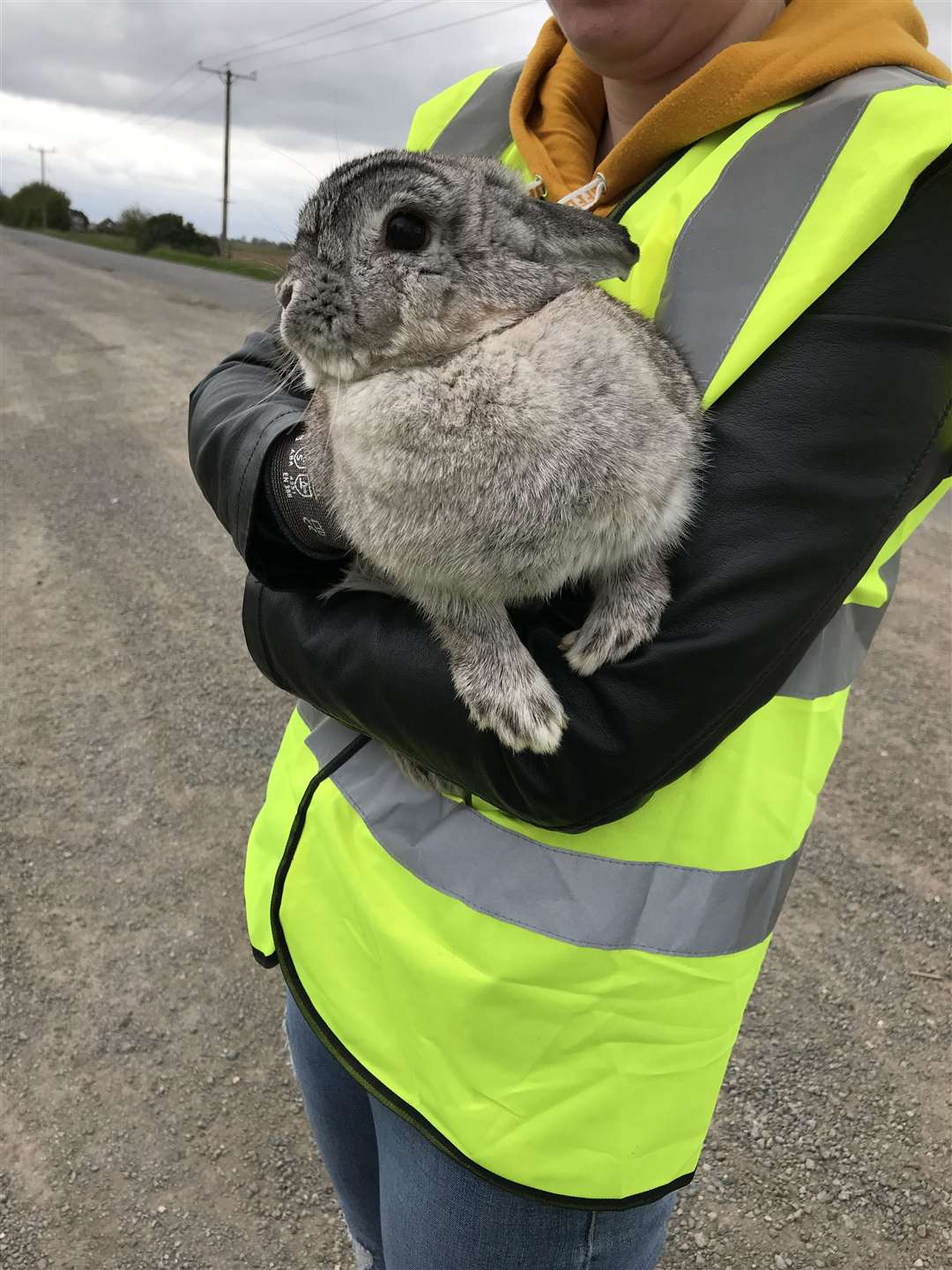 The rabbit found living among rubbish by litter pickers (19258026)