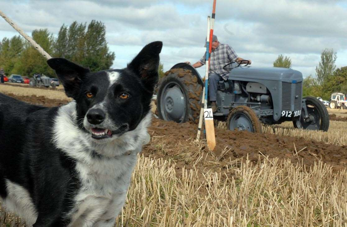 Last year's working weekend in Weston: Collie dog Nellie pictured enjoying the fun.