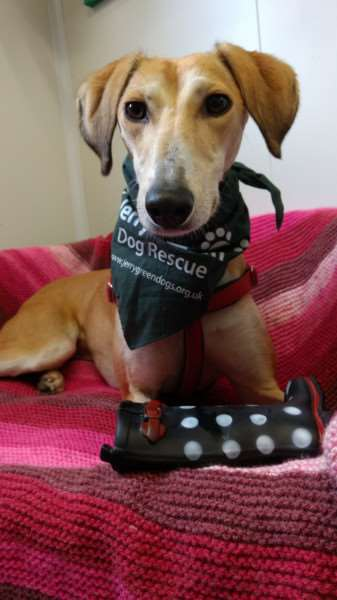 Can you give Doris a loving home?